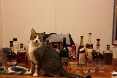 Bourbon Tasting III: Go Blind