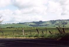 rolling_hills_and_cows.jpg