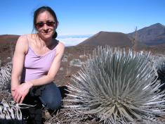 The Silversword Plant